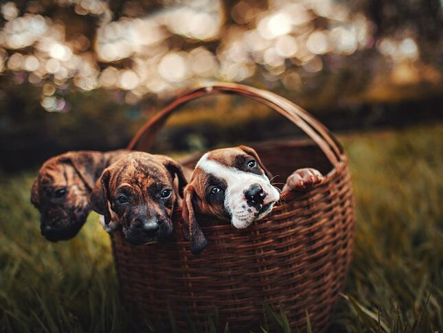 dogs in basket